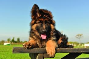 perro sales de schussler