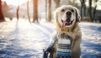 pelo-mascota-invierno.jpg
