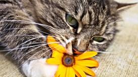 foto-de-gato-tierno-446762.jpeg