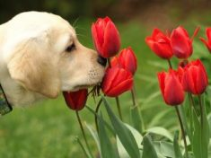 perro amapolas.jpg