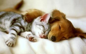distintas-personalidades-entre-duexos-de-perros-y-gatos.jpeg-252126156-084439