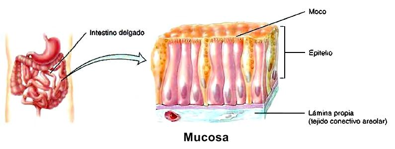 membranas 1.jpg